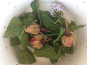 Fresh mint & rose bud tea