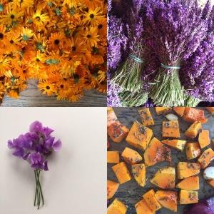 competition instagram lavender
